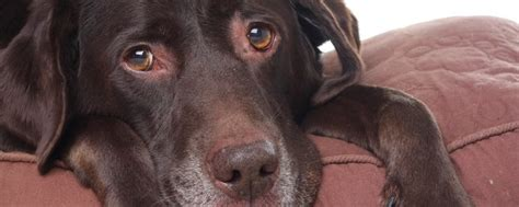 ¿Cómo puedo hacer que mi perro tenga menos gases?   Bekia ...