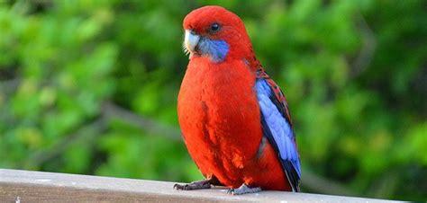 ¿Cómo puedo saber si mi pájaro está estresado?   Aves