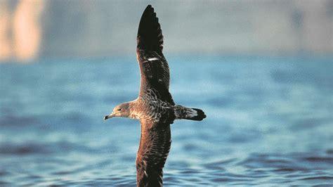 Cómo reducir las capturas accidentales de aves marinas en ...