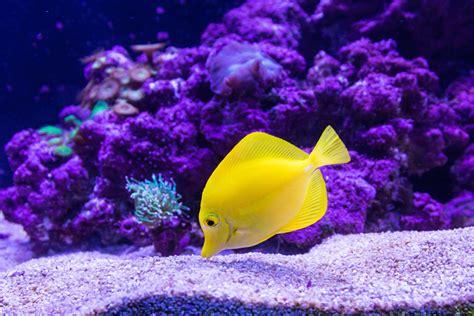 Cómo saber qué deben comer tus peces de acuario   Peces