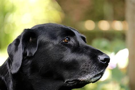 ¿Cómo saber si mi perro tiene cáncer de huesos?