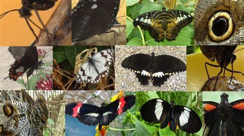 Como se alimentan las mariposas NATURALEZA   YouTube