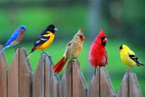 Cómo se clasifican las aves exóticas: grupos y componentes