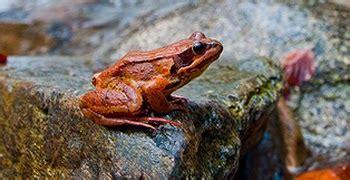 ¿Cómo se forman nuevas especies? ~ EducacienciasTIC