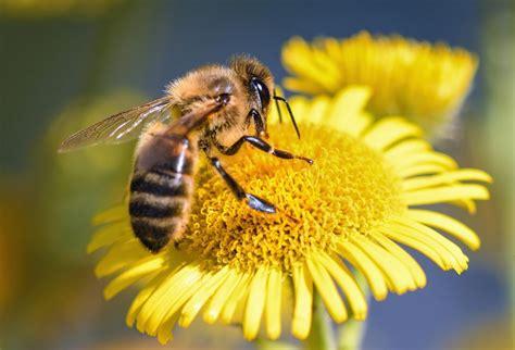 Cómo se hace la miel, desde la abeja hasta tu mesa