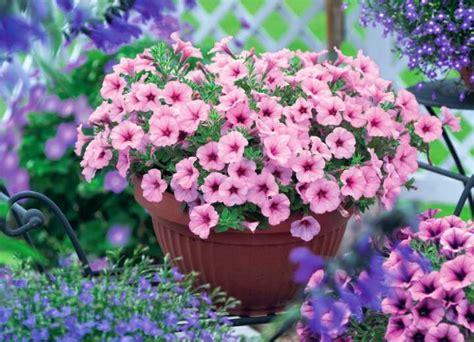¿Cómo se llaman las plantas que tienen flores ...