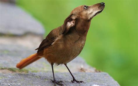 Como se ven distintas aves  pájaros  con cabeza de perros