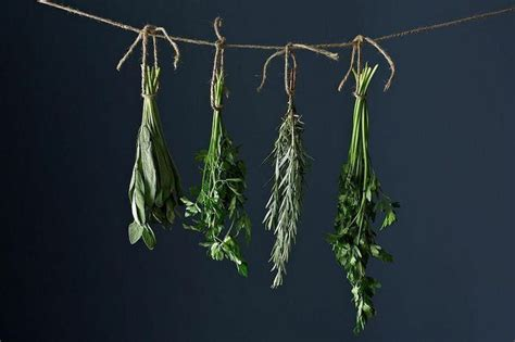 Cómo secar hierbas aromáticas   Hierbas aromáticas, Hierbas