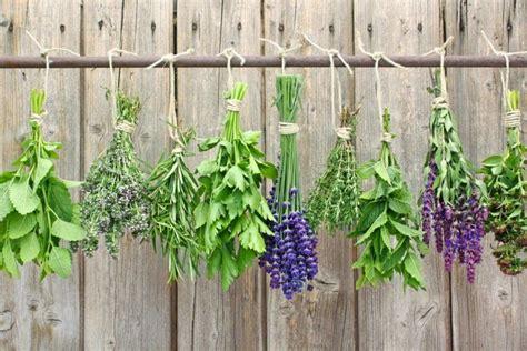 Como secar Hierbas Aromáticas y Medicinales para almacenar ...