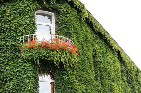 ¿Cómo son las fachadas vegetales?