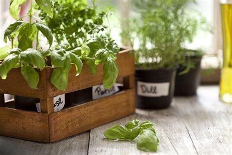 Cómo tener plantas aromáticas frescas y usarlas en la ...