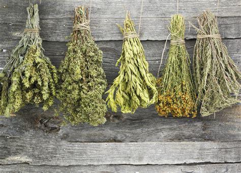 Cómo usar hierbas provenzales en la cocina   Blog Parada ...