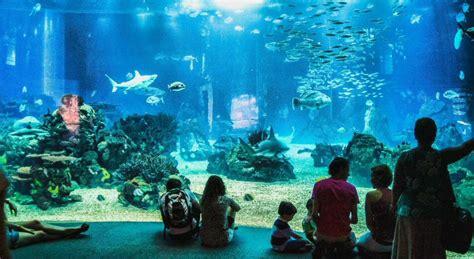 Cómo visitar el Oceanario de Lisboa; horario, precios ...