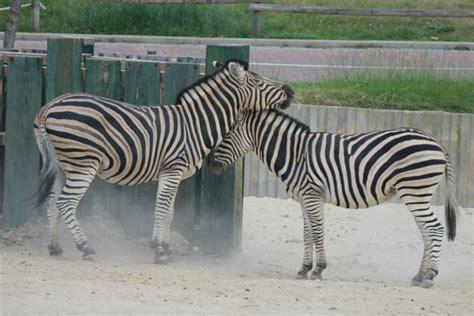 Cómo, y por qué, visitar el Zoo de Madrid con tus peques ;