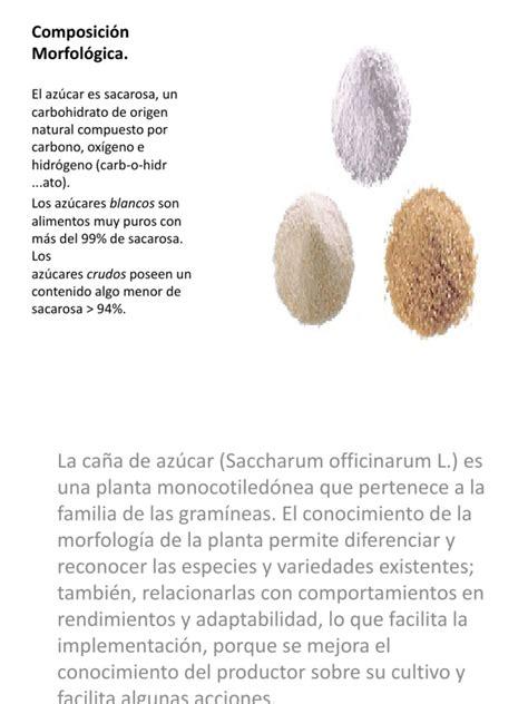 Composición Morfológica y Quimica del Azucar | Hoja ...