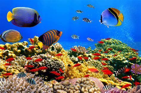 Compra de peces online en España amplia variedad