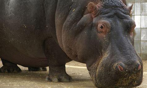 Compra Entradas Zoo Online –Barcelona | TicketsNET