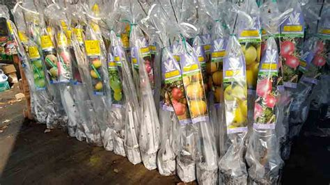 Comprar árboles frutales ya es posible en Plantamus ...