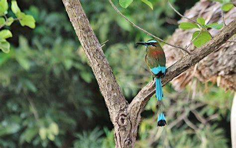 Comprar aves como mascotas provocará su extinción | EL DEBATE