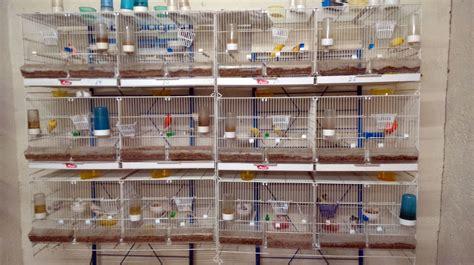 Comprar canarios en Granada: Piensos Alonso