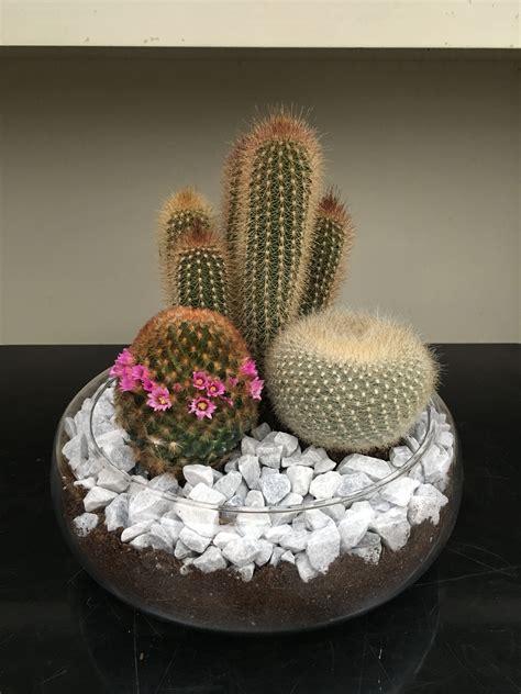 Comprar centro de cactus con envío a domicilio gratis ...