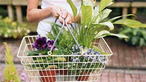 Comprar plantas de interior  todo lo que necesitas saber