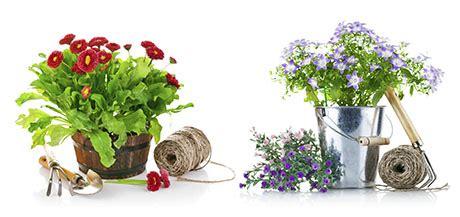 Comprar plantas en Igualada | Flors i Violes