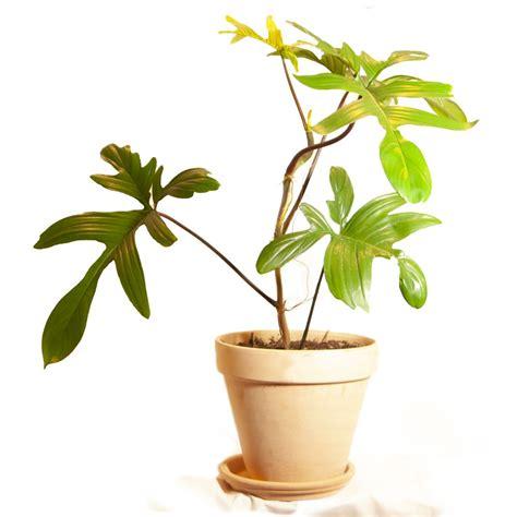Comprar Plantas exclusivas tropicales
