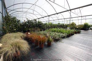 comprar plantas online en España es muy fácil en Plantamus ...