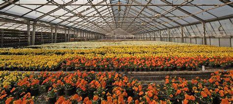 Comprar plantas online madrid baratas | Aromaticas ...