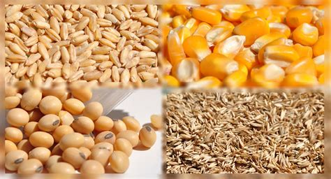 Con abrupta caída los granos se alejaron de sus precios ...