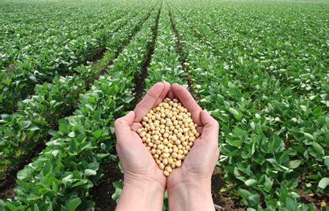 Con un solo gen aumentan el nivel de proteína en la soya ...