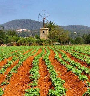 Concepto de agricultura   Definición en DeConceptos.com