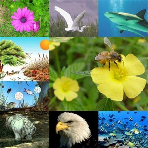 Conciencia Ambiental: Factores del medio ambiente