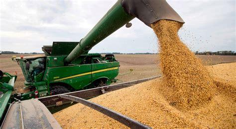 Concluyó la siembra de la soja y el maíz tardíos en el ...