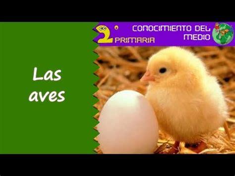 Cono, 2º Primaria. Tema 4. Las aves   YouTube