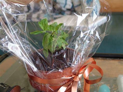 Conoce que plantas y flores puedes regalar en el día del padre