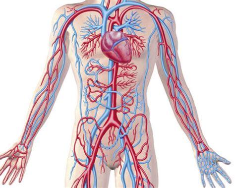 Conoce Tu Cuerpo Científicamente : Sistema Circulatorio