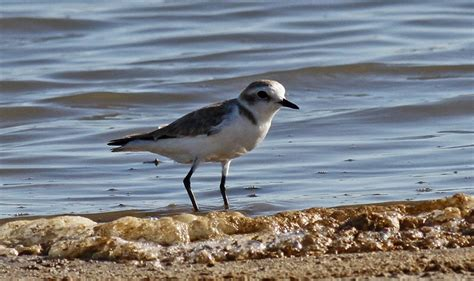 ¿Conoces la  Lista de las aves de España ?