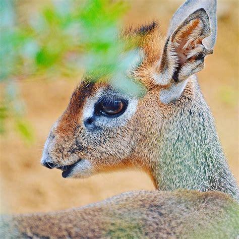 ¿Conoces todas las especies de #animales que habitan en # ...