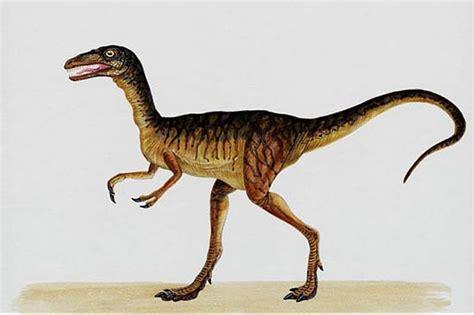 Conozcamos el Compsognathus   Guia de Dinosaurios. Aprende ...
