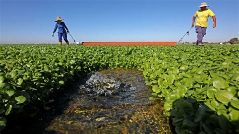 Consecuencias para el sector agrícola de la salida del ...