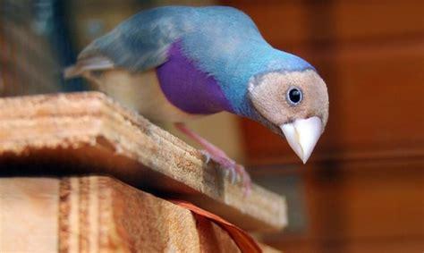 Consejos para adoptar pájaros como mascotas | Wakyma