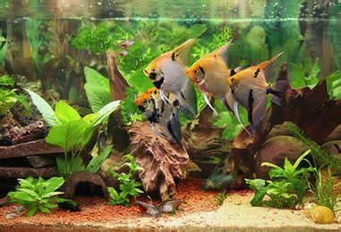Consejos para comprar peces ornamentales