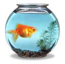 Consejos para comprar un acuario de peces para los niños ...