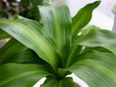 Consejos para cuidar tus plantas de interior en invierno