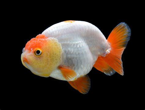 Consejos para el cuidado de tus peces   Miscota