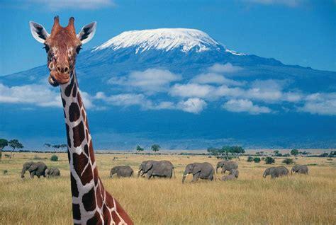 Consejos para realizar un safari en África | Felices ...