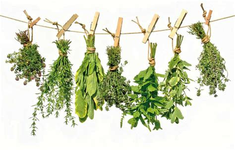 Consejos para secar hierbas o plantas aromáticas y ...