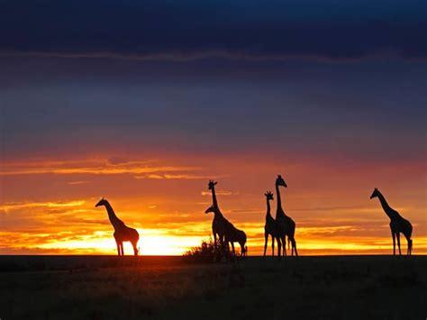 Consejos para viajar a Kenia